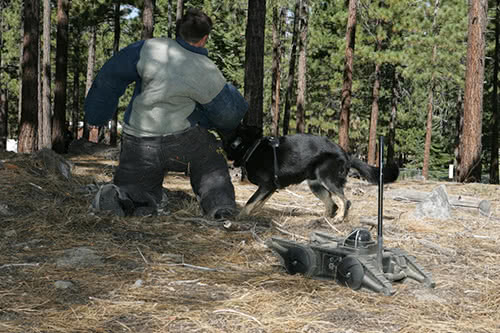 K9 Robot Training